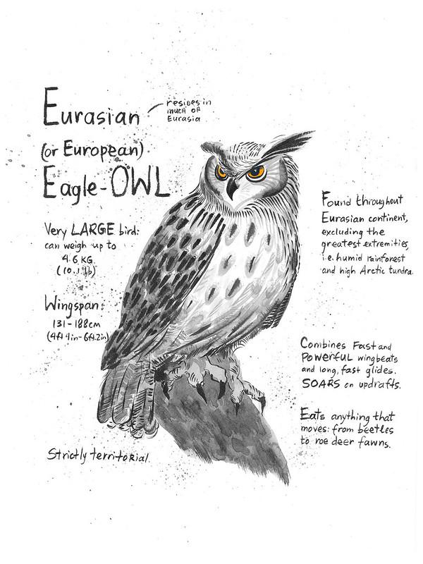Owls_25_Eurasian_Eagle-Owl
