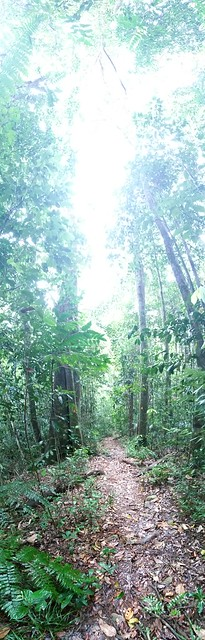 II - How dark is it in a tropical rainforest? Mount Bartle Frere