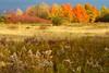 Across a Vermont Field