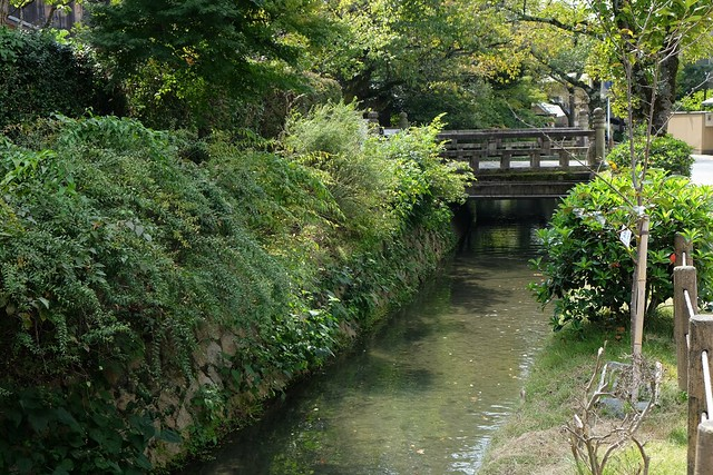 Walking along the philosophers trail in Kyoto