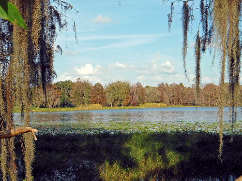 trees lake water grass scenery florida spanishmoss inverness aquaticvegetation