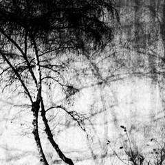 Arbres d'hiver. Novembre 2015 #dansmonoeil #trees #streetphotography #photographer ©juliepeiffer