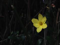 February Blossom
