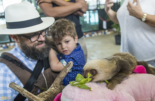 Hoffmann's two-toed sloth Gamboa Wildlife Rescue pandemonio 2017 - 13 | by Eva Blue