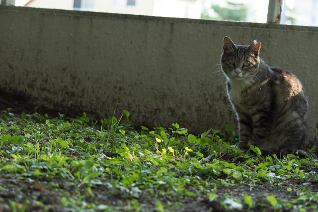 常磐公園の猫