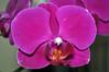 5ª Flower by GFerreiraJr ®