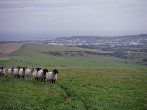 Sheep and Newhaven, with Waste-to-Energy Plant