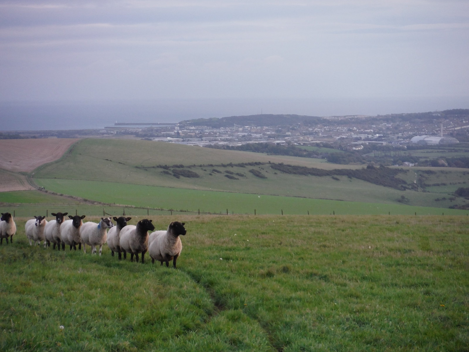Sheep and Newhaven, with Waste-to-Energy Plant SWC Walk 25 - South Downs Way 8 : Southease to Eastbourne