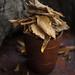 Muntingia Calabura dried leaves by Ira Rodrigues