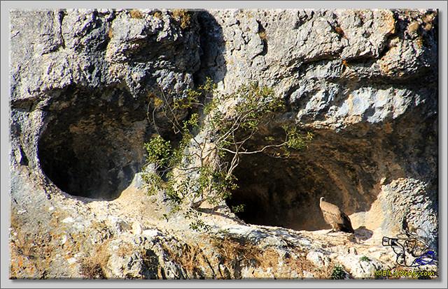Cañón del río Lobos (6)