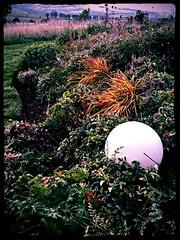 Maison Bras garden foliage