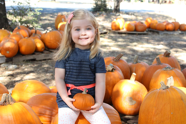 Pumpkin Patch 2015