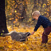 Woodland Friends by ljholloway photography
