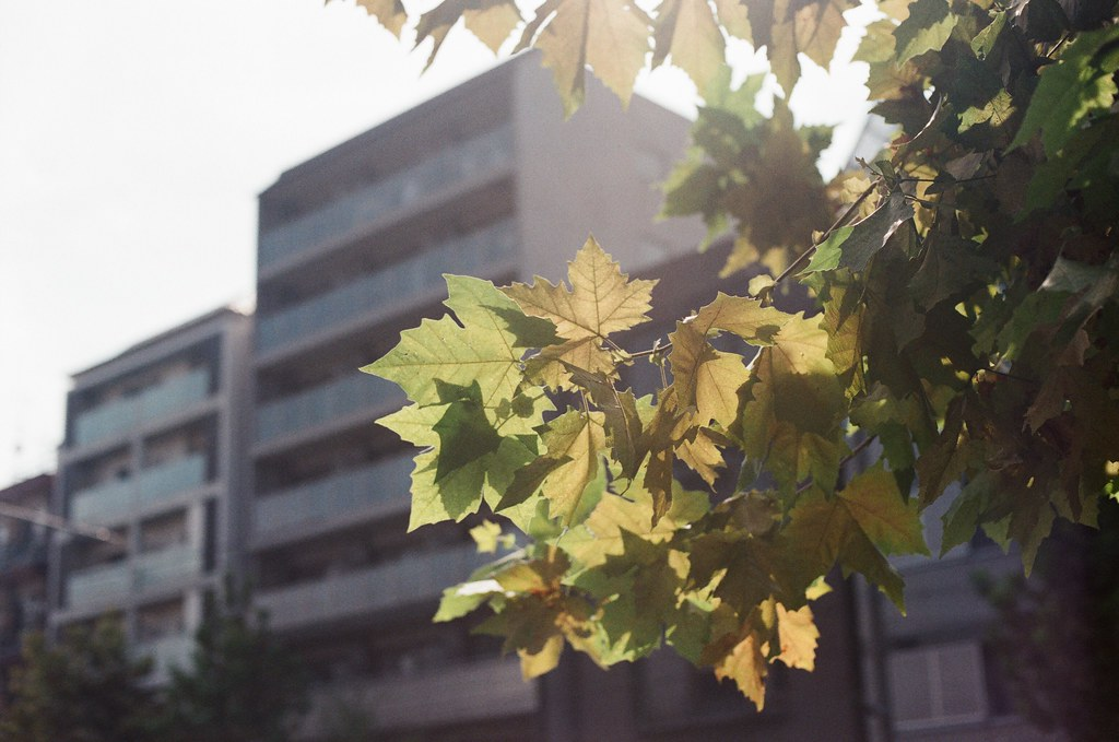 泛黃的楓葉 Kyoto 2015/09/23 我拍過鮮綠的楓葉,當我看到有點泛黃的楓葉時,我才發現,原來,時間過了這麼久了,我所記憶的那個夏天跟著我到了秋天。  我記得那時候有一點點的難過,只有我還留在原地不知所措,但時間很殘酷的繼續往下走 ...  Nikon FM2 Nikon AI Nikkor 50mm f/1.4S AGFA VISTAPlus ISO400 0947-0015 Photo by Toomore