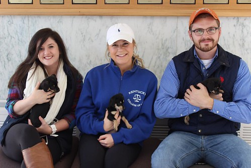"These Cats are thankful for puppy power during the ""Dog Days of Finals"" at #UKLaw. The Christian Legal Society at UK College of Law gave their fellow students an opportunity to play with their new furry friends from the animal rescue organization Kentucky"