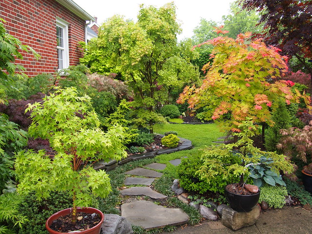 Flickr japanesemaplegarden for Garden design with japanese maple