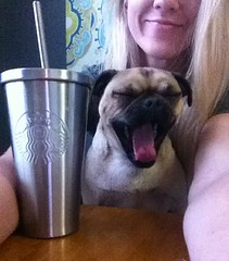 """Early morning Bible sesh after a 9:30pm """"Oh, Mom, ummmm... I completely forgot I have to start a huge project and it's due tomorrow!"""" :dog::open_mouth::grimacing::sleeping: #yawn #coffeeeeee #puglyfe"""