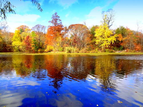 newyork brooklyn dmitriyfomenko image sky clouds prospectpark foliage autumn fall reflection trees