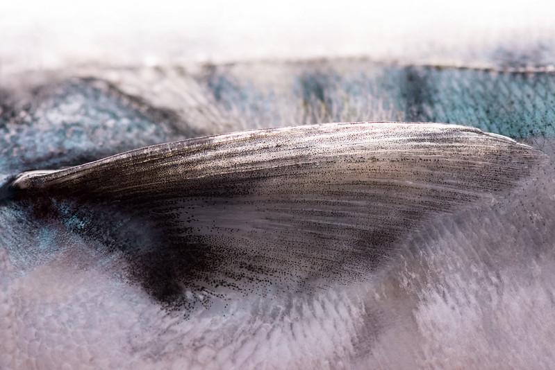 Macro Mackerel By Helen Errington