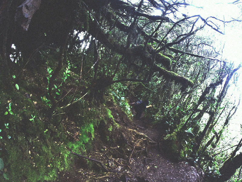 mount irau mossy forest (9)