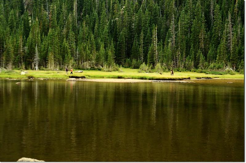 Elk at Jewel Lake 4