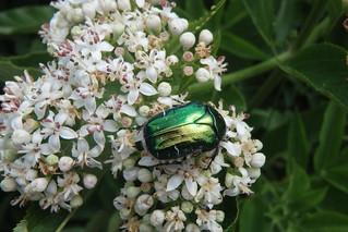 beetle-ro-bobturner