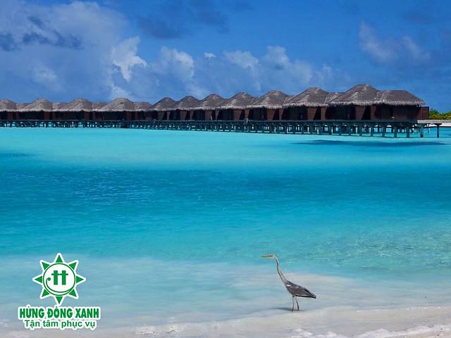 du lịch Maldives giá tốt