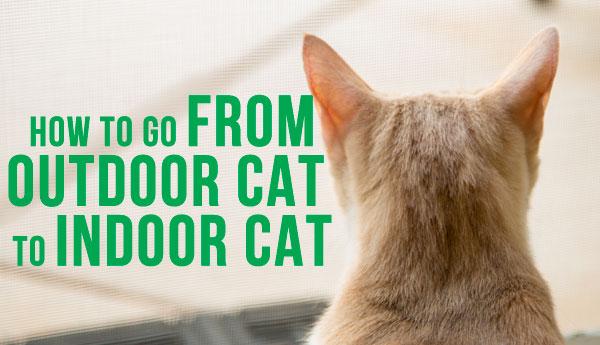 from-outdoor-to-indoor-cat