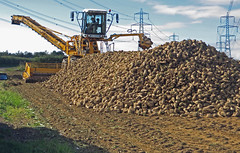 Beet Stack on Horkstow Wolds