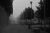 Into A Foggy Morning