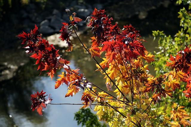 Colors at Three Bridges Park