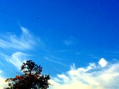 Bird in Blue Sky
