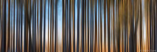 Bar code forest