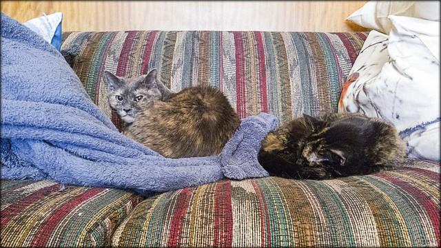 Convalescing Cats