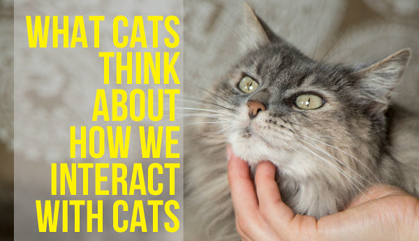 cats-tell-us-how-they-really-feel