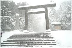 日本北海道.札幌_北海道神宮.02