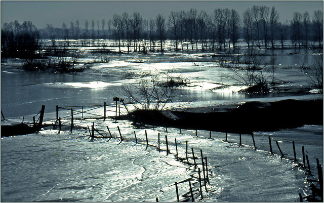 Frozen flooding along the river