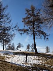 Breezin Like a Tree