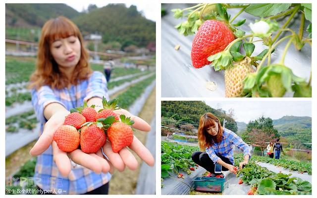 劉正男高冷草莓園 (6)