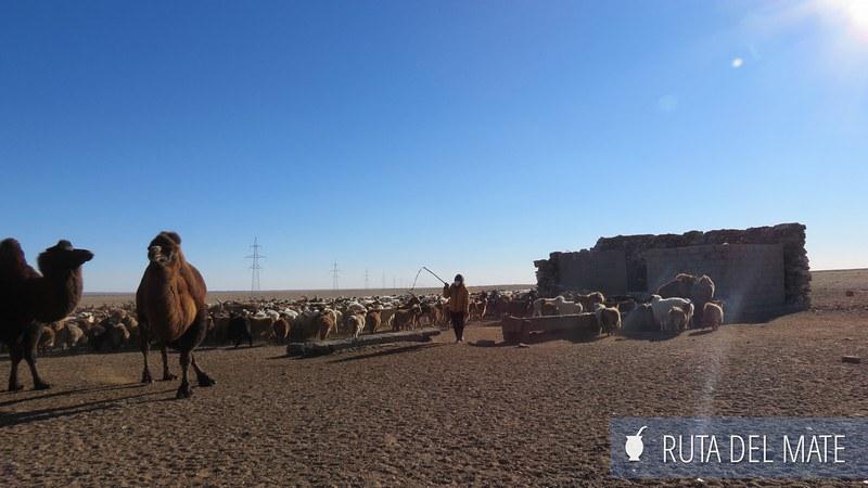 Desierto Gobi Mongolia (29)