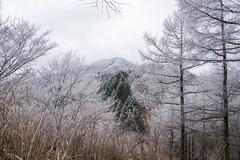 小持山を眺めながらシラジクボへ下る