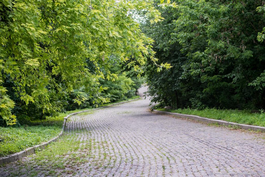 Forest driveway.jpg