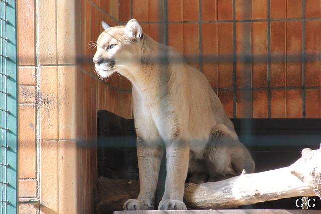 Sonntags-Besuch im Tierpark Friedrichsfelde 04.10.201540