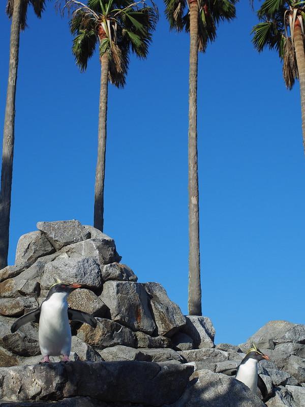 椰子の根元のペンギン