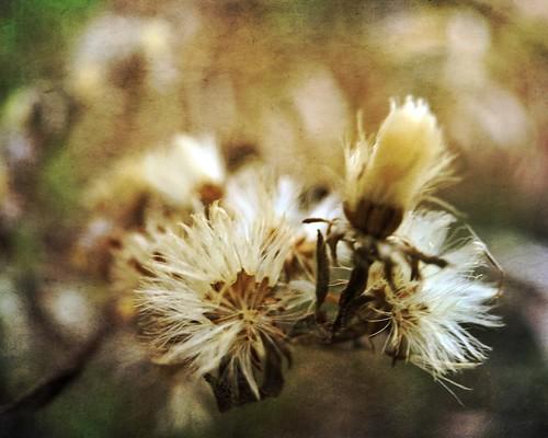 Dry Bloom