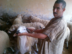 Showing off the sacrificial ram