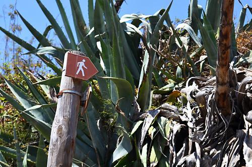 Signpost, Tegueste, Tenerife