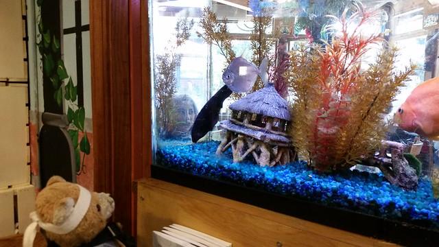 Kuma & the Fish
