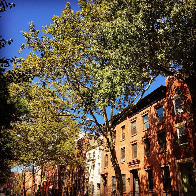 Douglass Street between Court and Smith on a particularly beautiful September day. #carrollgardens