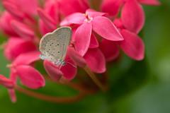 A tiny butterfly